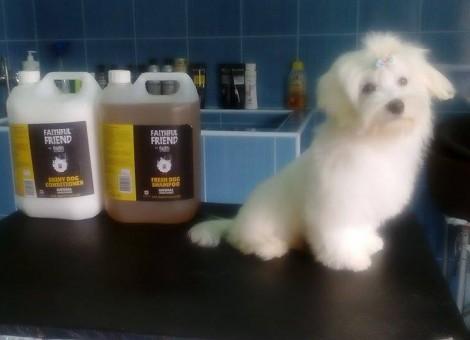 Kimi kutya első kozmetikája1