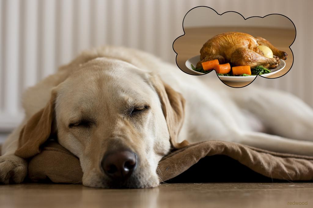 alvo-kutya-vacsora-utan kutyasampon cikk
