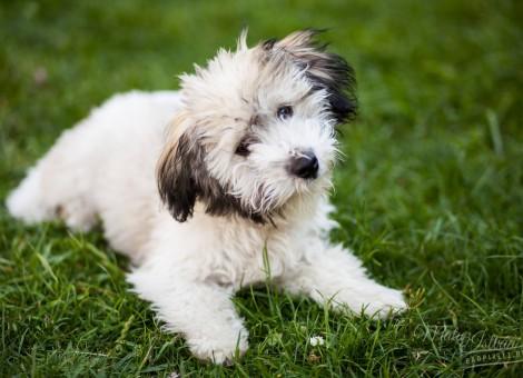 chester-kutya