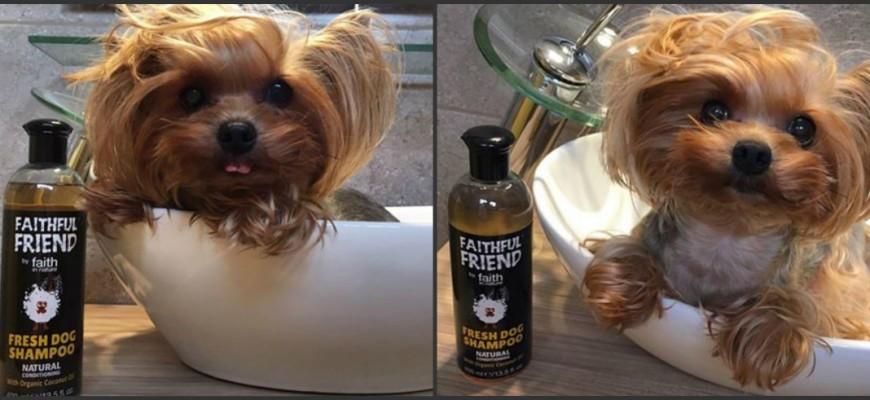 chloe-kutya-es-a-kokuszos-faithful-friend-kutyasampon